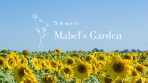 Mabel's Garden Sunflower Field